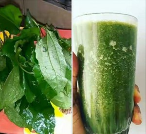 Side effects & Wonderful Health benefits of Ugu Leaf Juice (pumpkin leaf juice)