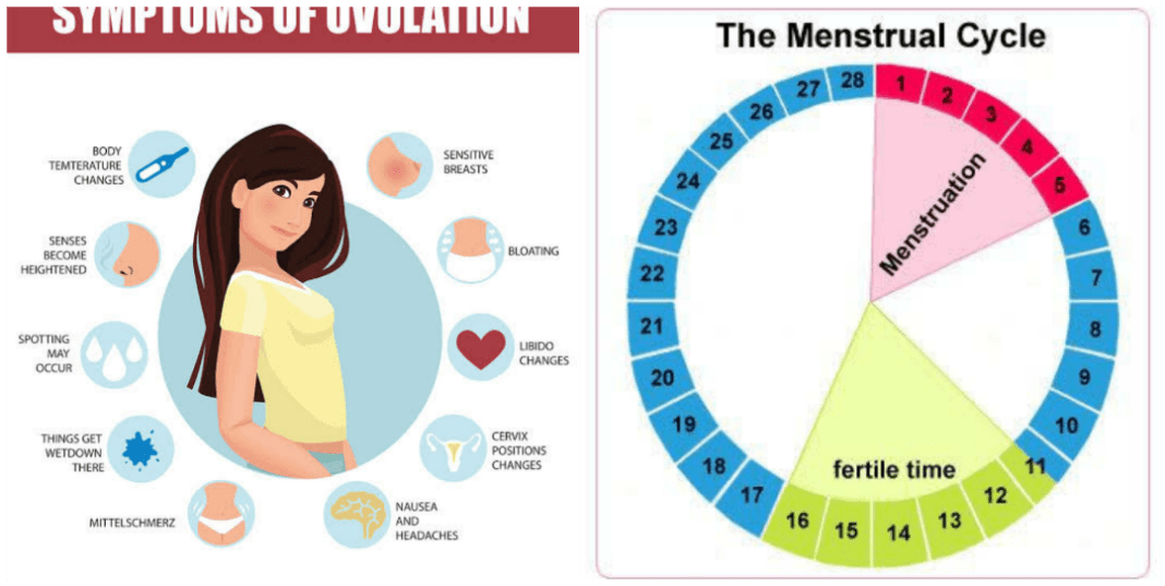 How to calculate ovulation and safe period
