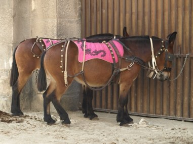 Mules waiting outside the Arena to get to work