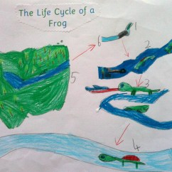 Diagram Of Learning Cycle Bass Tracker Wiring Over 40 000 Visits To My Blog- Amazing! Living Things Have A Life Cycle. | Nina Davis -teaching ...