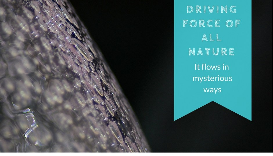 Water-is-the-driving-force-of-all-nature-Nina-Elshof-Feng-Shui-NineStarKi