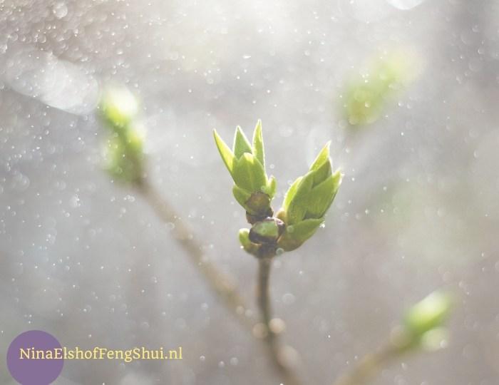 hout, vernieuwing, Nine star Ki voorspelling