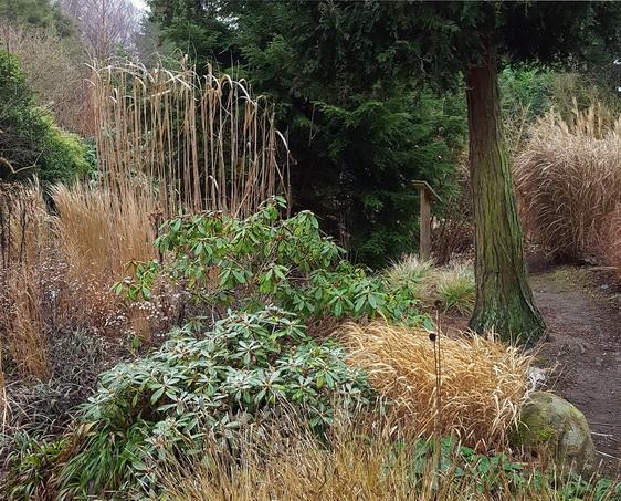 Græsser Som Fokuspunkter I Vinterhalvåret