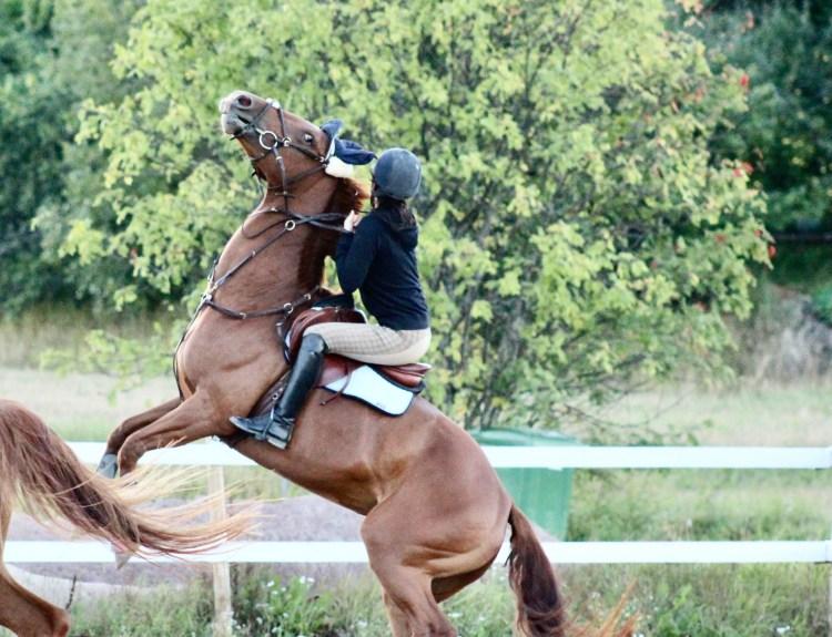 hevosen koulutus