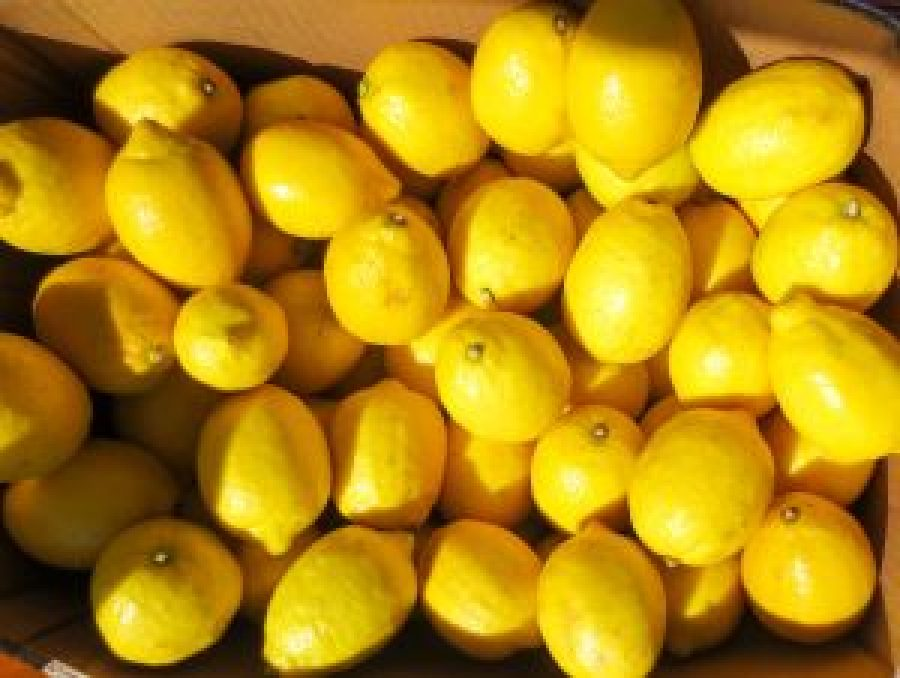 Yellow lemons at Ottawa Farmer's Market