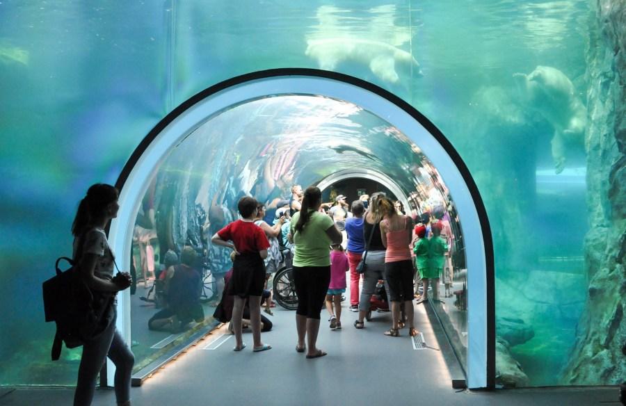 Polar bear viewing tunnel