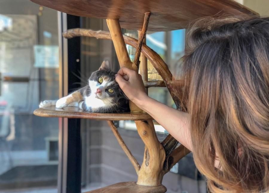The Feline Café