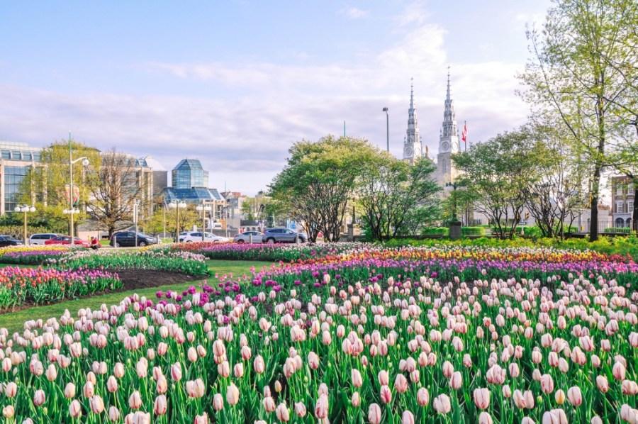 The Ottawa Tulip Festival Guide
