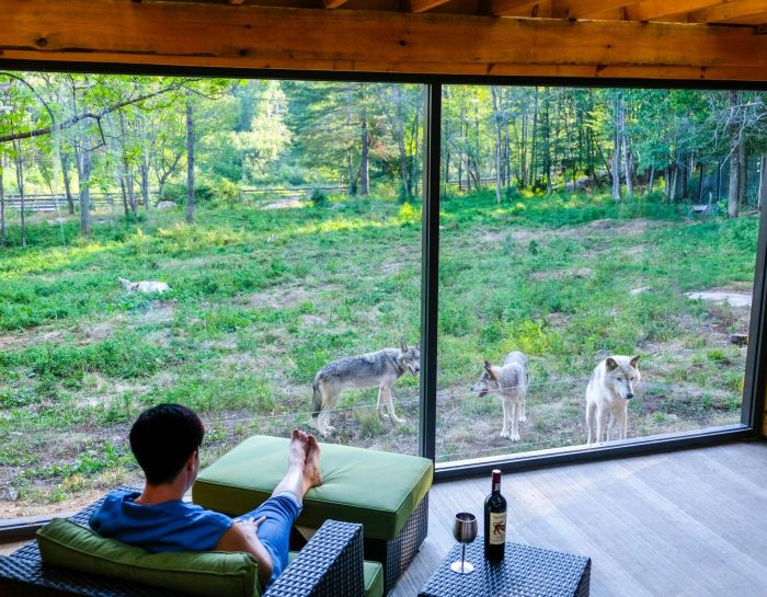 OPEN NOW: You Can Sleep With Wolves and Bring Your Friends in these Wolf Lodges in Quebec