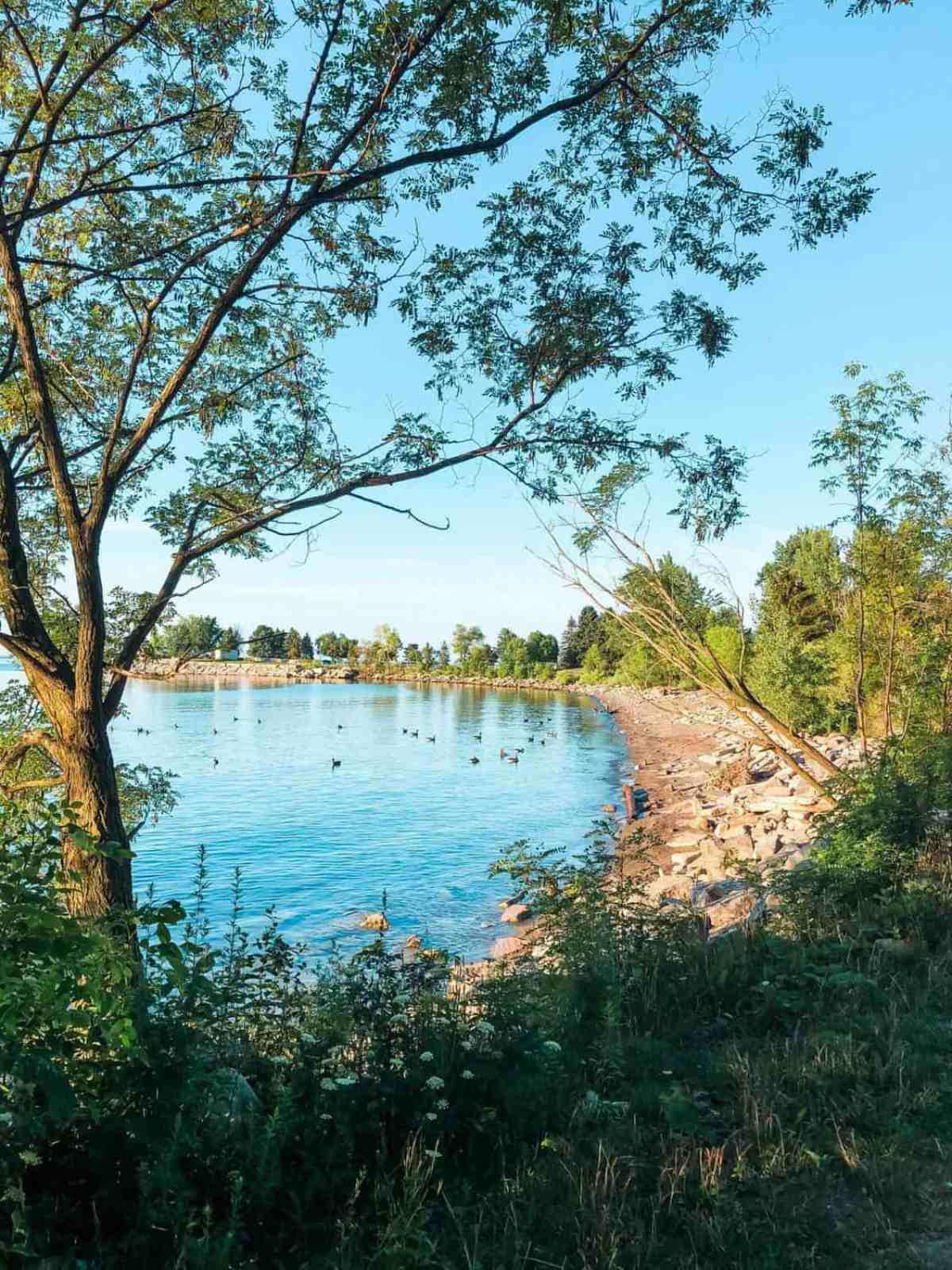 view of lake ontario from bluffer's park