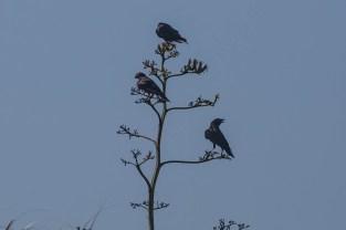 Strange tree of blackbirds
