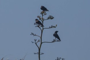 Strange tree of blackbirds