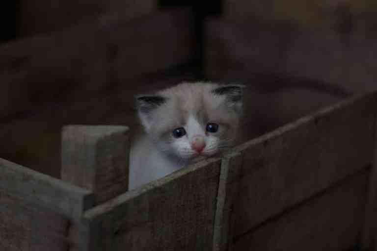 chaton dans une cagette