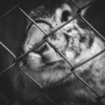 Une cage pour mes lapins ?