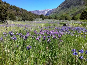Backpacking trip up Big Indian Gorge, Steens summit in the background, wildflowers everywhere.