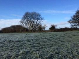 frostyfield