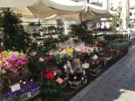 Flower Stall