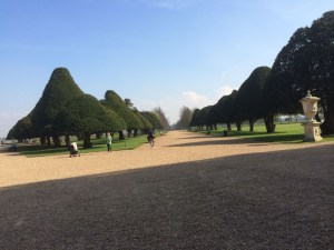 Wide Pathways and Beautiful Trees Hampton Court Palace Gardens