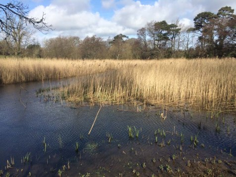 Reed Beds...