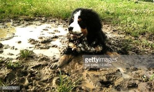 """Niente di meglio che una lotta nel fango per la lotta al cancro: chiedetelo agli irlandesi con la loro """"Mud Madness""""..."""