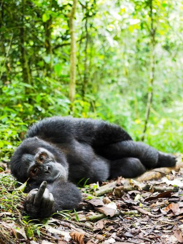 comedy-wildlife-photography-awards-shortlist-2016-24-57fb40c5cd8d1__880