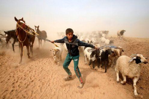 Le offensive militari provocano la fuga non solo di donne e bambini, ma anche di animali.