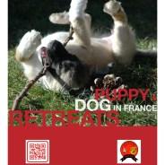 Puppy & Dog Retreats