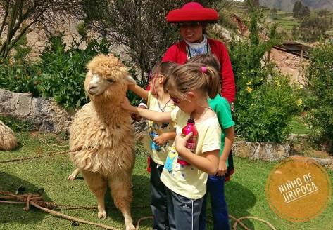 Alpacas em Chinchero no Peru
