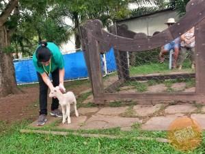 Amamemntação na Casa da Ovelha em Bento Gonçalves