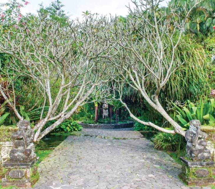 tanaman untuk taman gaya bali