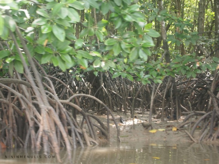 hutan sumber makanan
