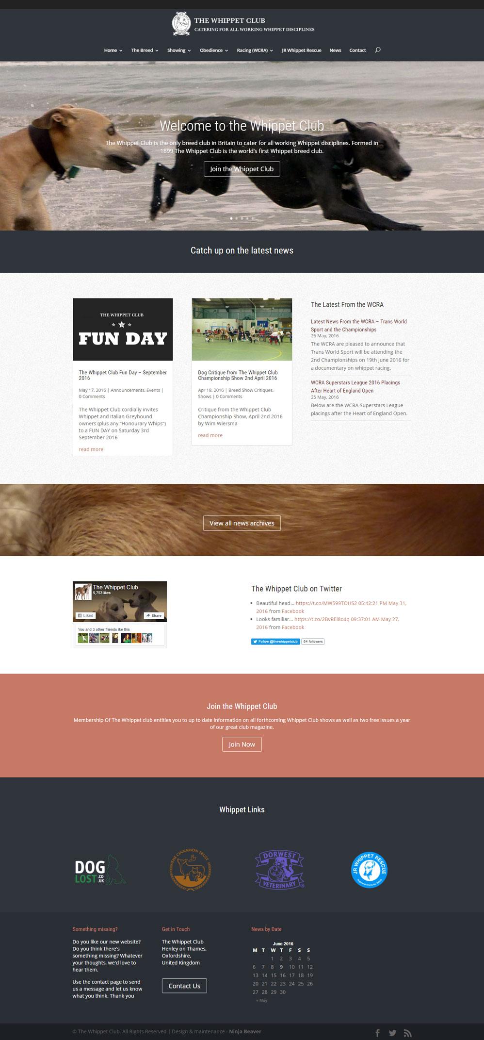Ninja Beaver - The Whippet Club Website