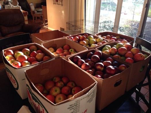 7 1/2 bushels of apples