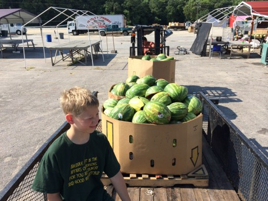 Loading watermelons for our cows