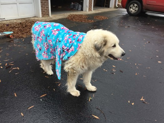 Cotton in her last days, wearing a bathrobe that Myla had put on her