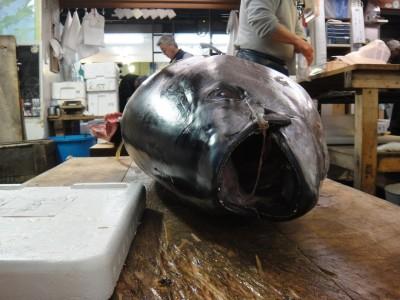 fish-523838_1280