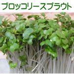 ブロッコリースプラウトは種(タネ)から育てるのが簡単・新鮮で効果的