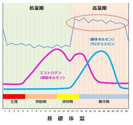 基礎體溫の見方【ホルモン分泌を知るグラフ例】