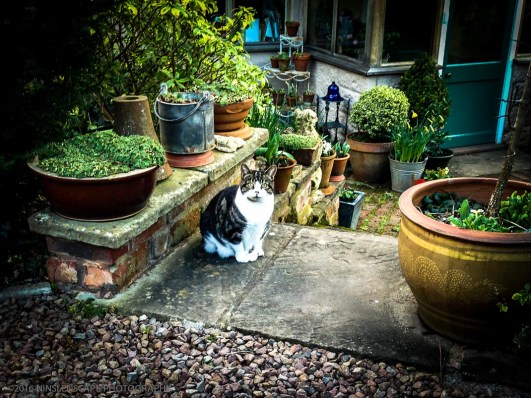 Matilda the cat, who waited for us anxiously at the entrance when we first arrived in the cottage