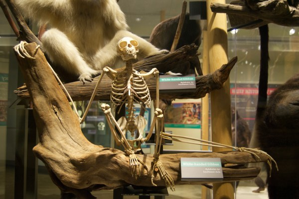 Cleveland Museum Natural History Ninthandsuperior