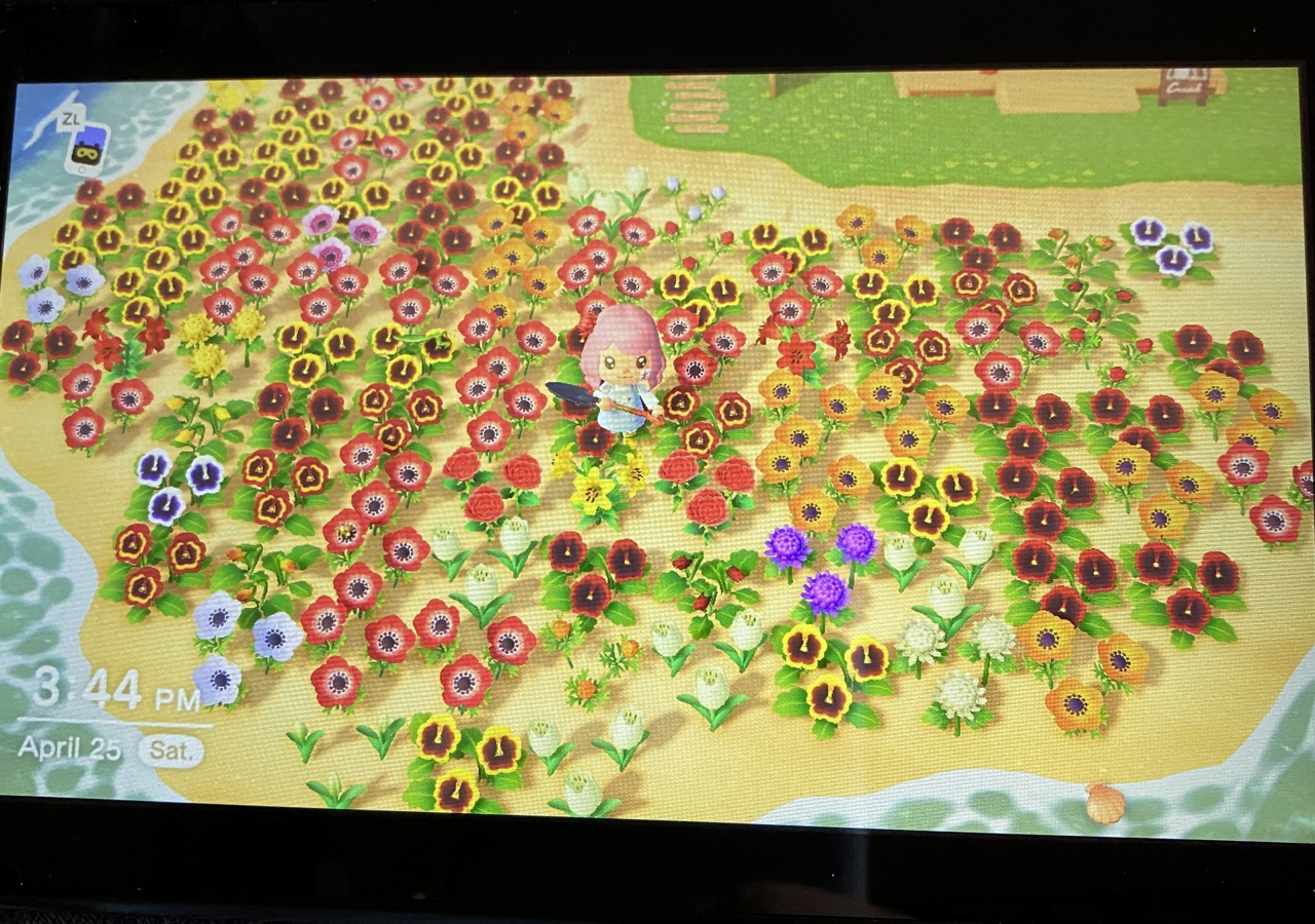 Everything You Need To Know About Acnh Flower Breeding Ninty Gamer