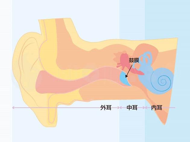 耳の中の構造の画像