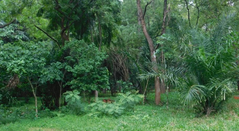 Haller Park Mombasa