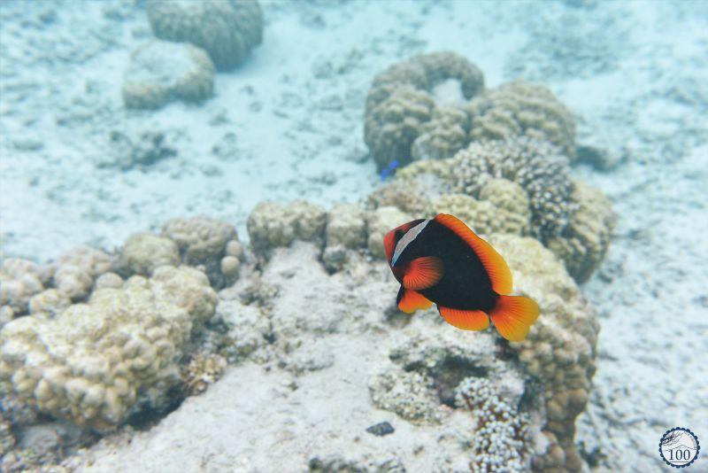 Zamami - Kerama islands