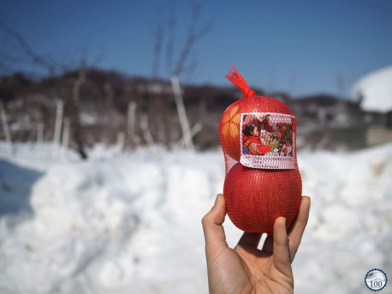 Pommes Fuji devant des vergers, Iiyama.