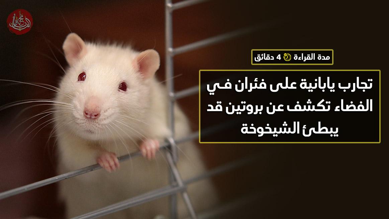 تجارب يابانية على فئران في الفضاء تكشف عن بروتين قد يبطئ الشيخوخة