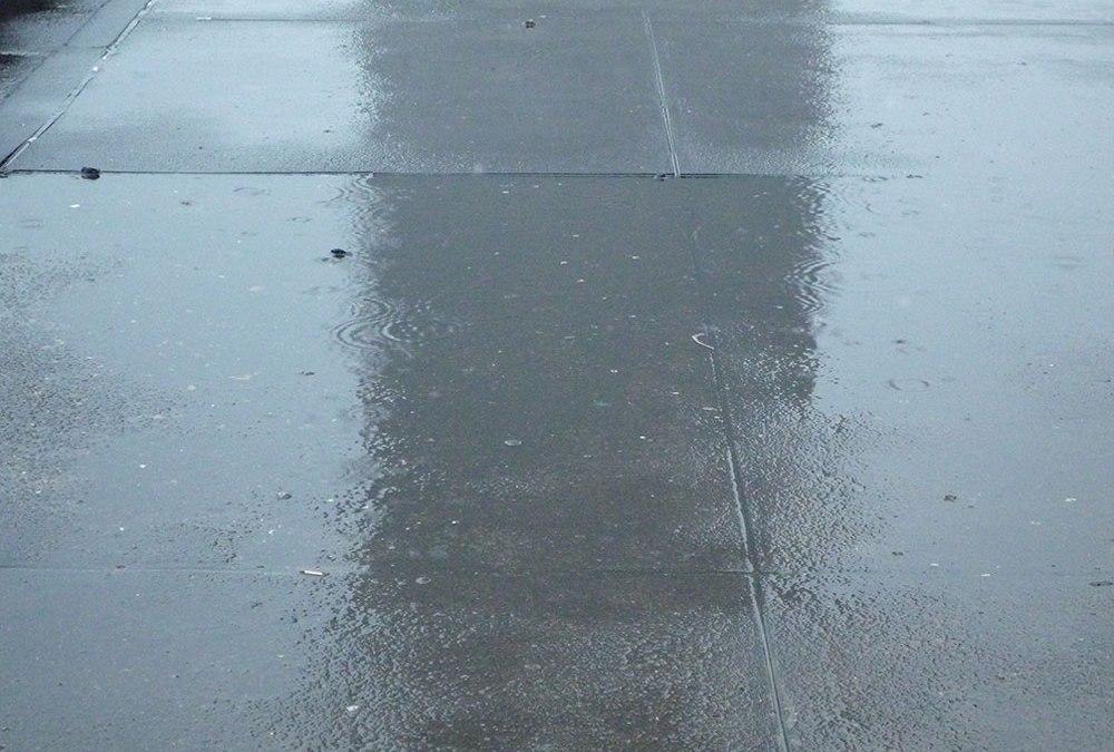 Pflaumenregen