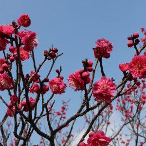Frühlingsanfang - Shunbun no Hi