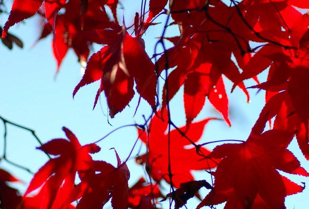 Japanische Feiertage –  22. September – Herbstanfang  – Shūbun no Hi