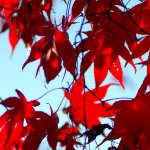 Herbstanfang - 秋分の日 - Shūbun no Hi